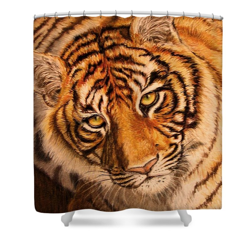 Tiger Shower Curtain featuring the drawing Tiger by Karen Ilari