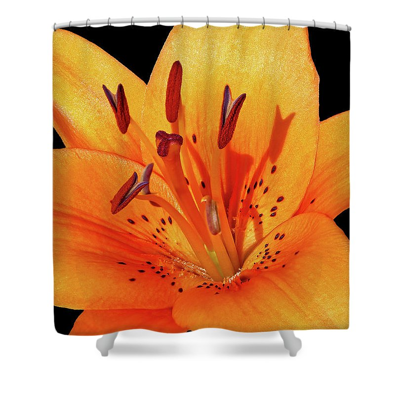 Flower Photos Shower Curtain featuring the photograph Tiger Lily by Maria Ollman