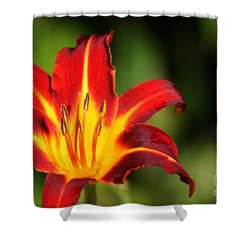 Tiger Lily Shower Curtain featuring the photograph Tiger Lily0078 by Gary Gingrich Galleries