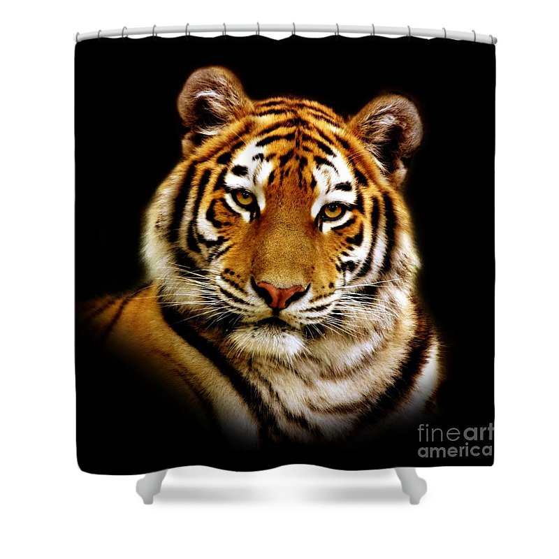 Wildlife Shower Curtain featuring the photograph Tiger by Jacky Gerritsen