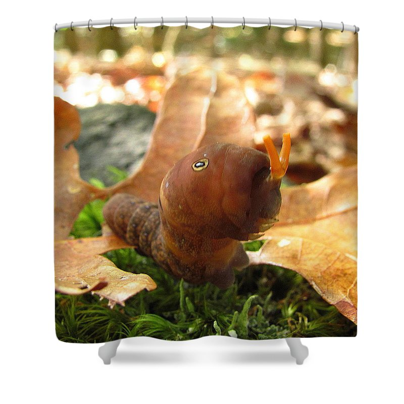 Tiger Swallowtail Caterpillar Image Tiger Swallowtail Caterpillar Prints Entomology Biodiversity Insect Images Arthropod Images Metamorpheses Change Final Larve Stage Forest Ecology Shower Curtain featuring the photograph Tiger Swallowtail 2 by Joshua Bales