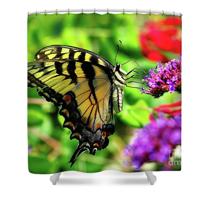 Bug Shower Curtain featuring the photograph Tiger Swallowtail Butterfly by Nick Zelinsky