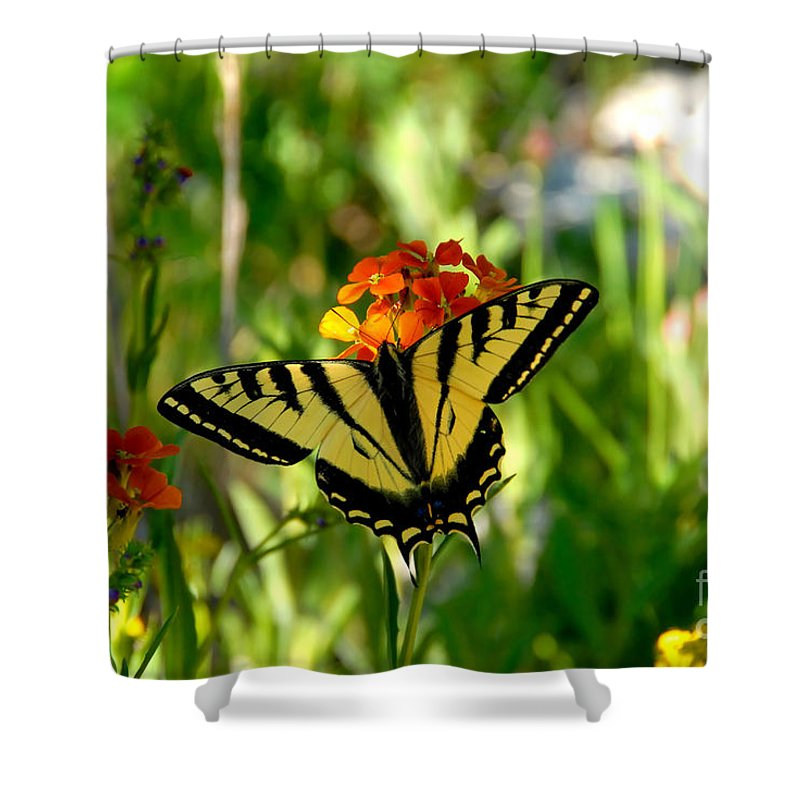 Tiger Tail Butterfly Shower Curtain featuring the photograph Tiger Tail Beauty by David Lee Thompson