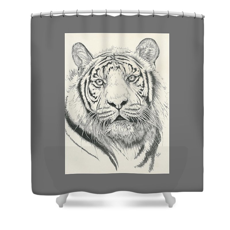 Tiger Shower Curtain featuring the drawing Tigerlily by Barbara Keith