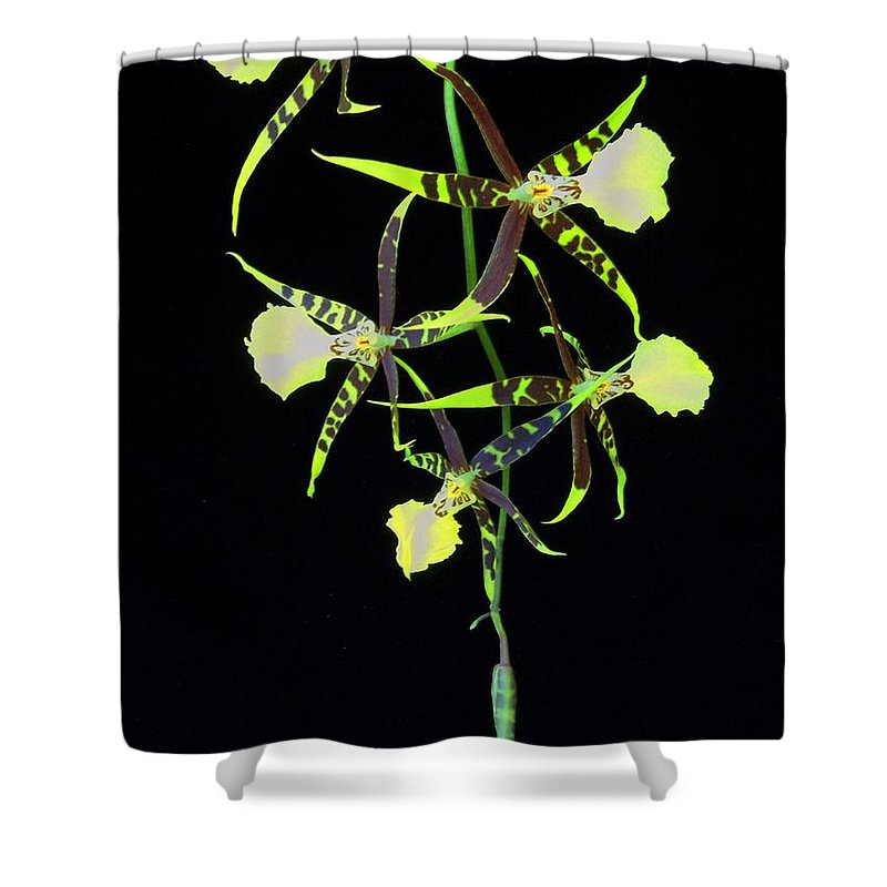 Orchid Shower Curtain featuring the photograph Tigers by Laurie Paci
