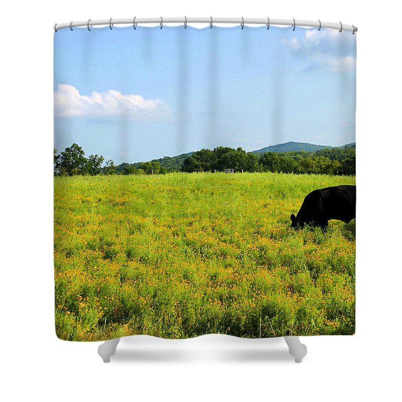 Cow Shower Curtain featuring the photograph Til The Cows Come Home by Kristin Elmquist