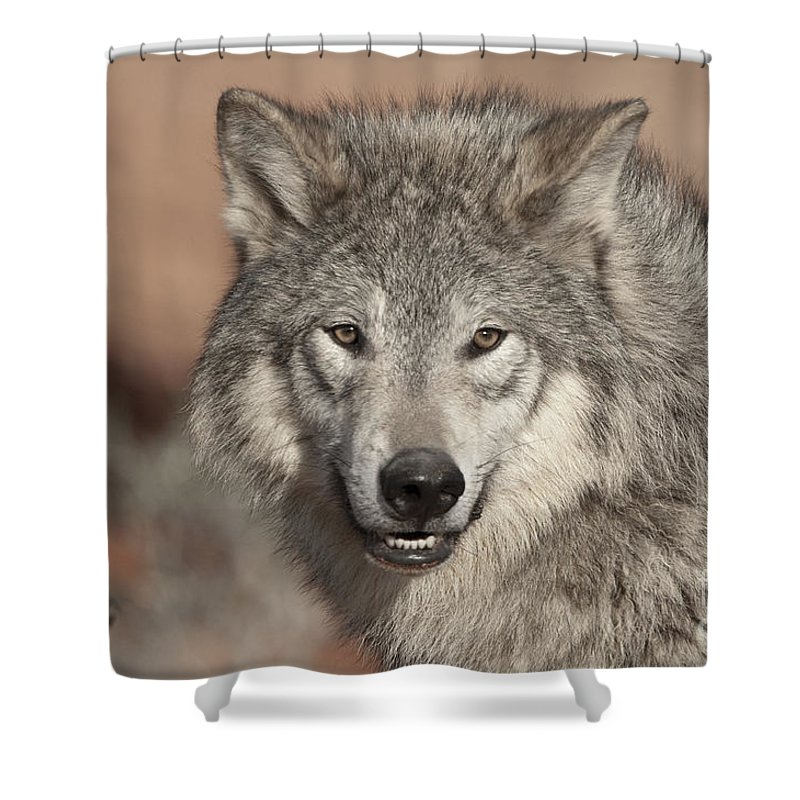 Wolves Shower Curtain featuring the photograph Timber Wolf Portrait by Sandra Bronstein