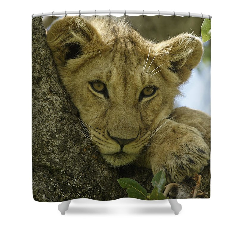 Africa Shower Curtain featuring the photograph Time for a Nap by Michele Burgess