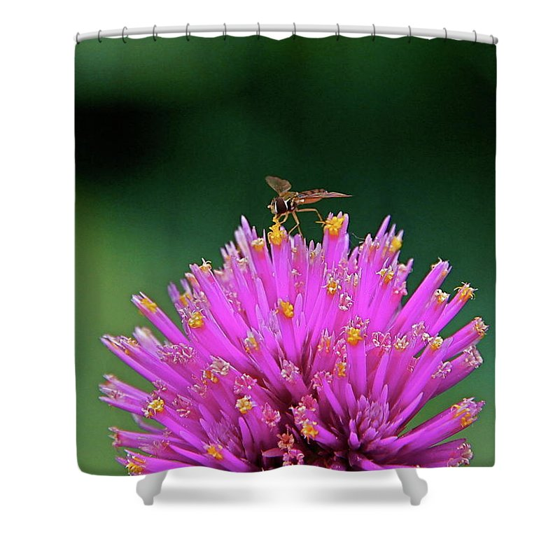 Hoverfly Shower Curtain featuring the photograph Tiny Aviator by Byron Varvarigos