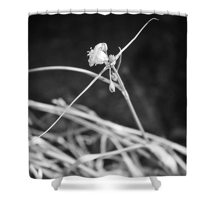 Wildflowers Shower Curtain featuring the photograph Tiny Ballerina by Kathy McClure