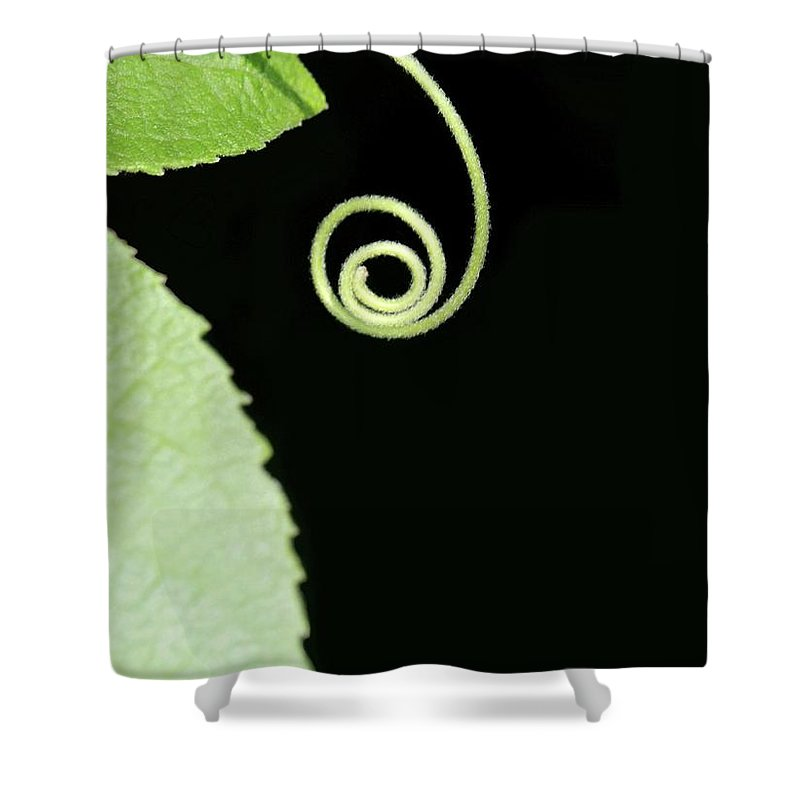 Curl Shower Curtain featuring the photograph Tiny Curl by Sabrina L Ryan