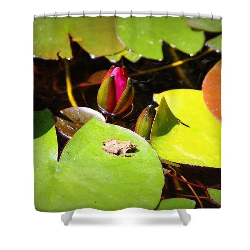 Frog Shower Curtain featuring the photograph Tiny Frog by Tina Meador