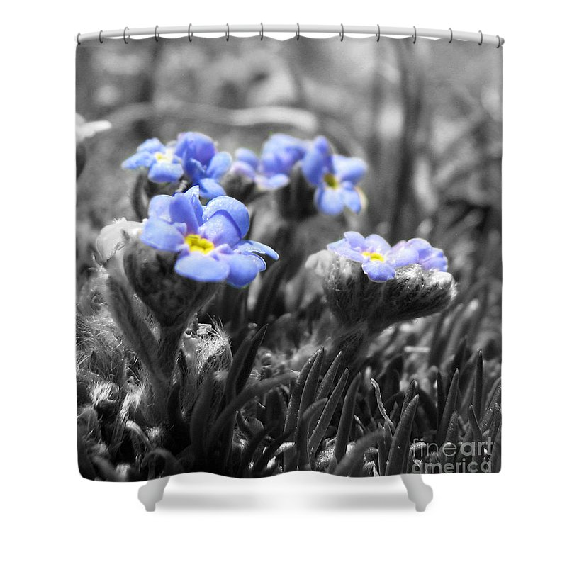 Flowers Shower Curtain featuring the photograph Tiny Gems by Amanda Barcon