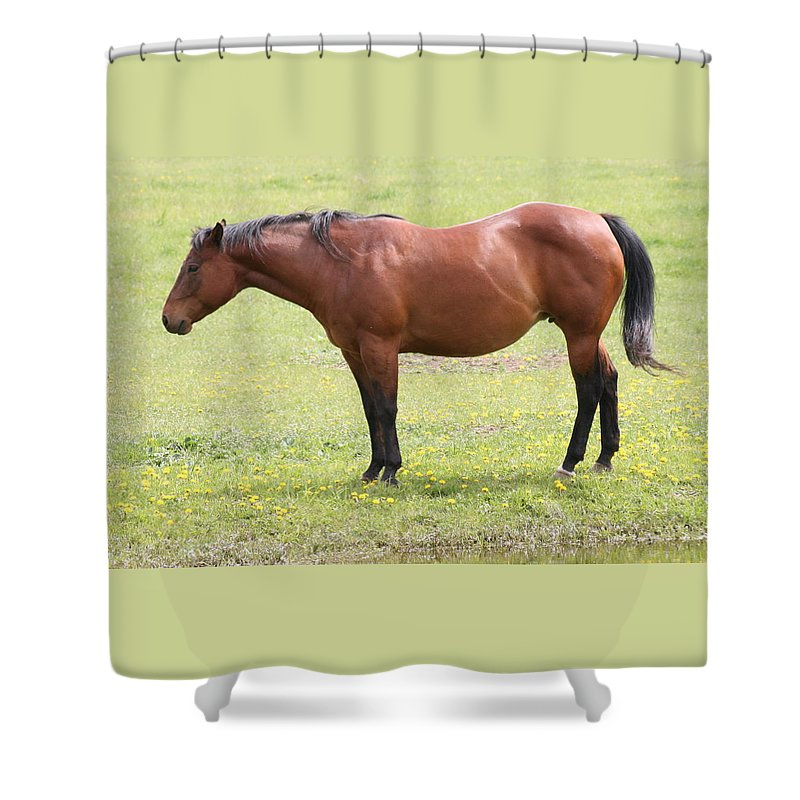 Horse Shower Curtain featuring the photograph Tired Horse by Tiffany Vest