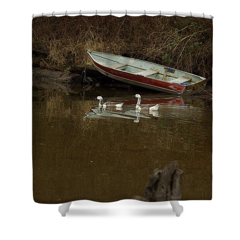 Geese Shower Curtain featuring the photograph To Float Or Not To Float by Cindy Johnston