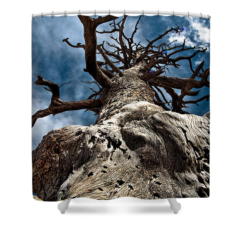 Art Shower Curtain featuring the photograph To The Sky by Christopher Holmes