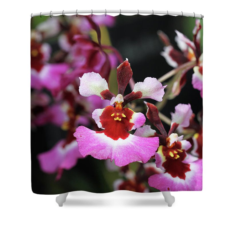 Orchid Shower Curtain featuring the photograph Tolumnia Pink Panther Orchid by Judy Whitton