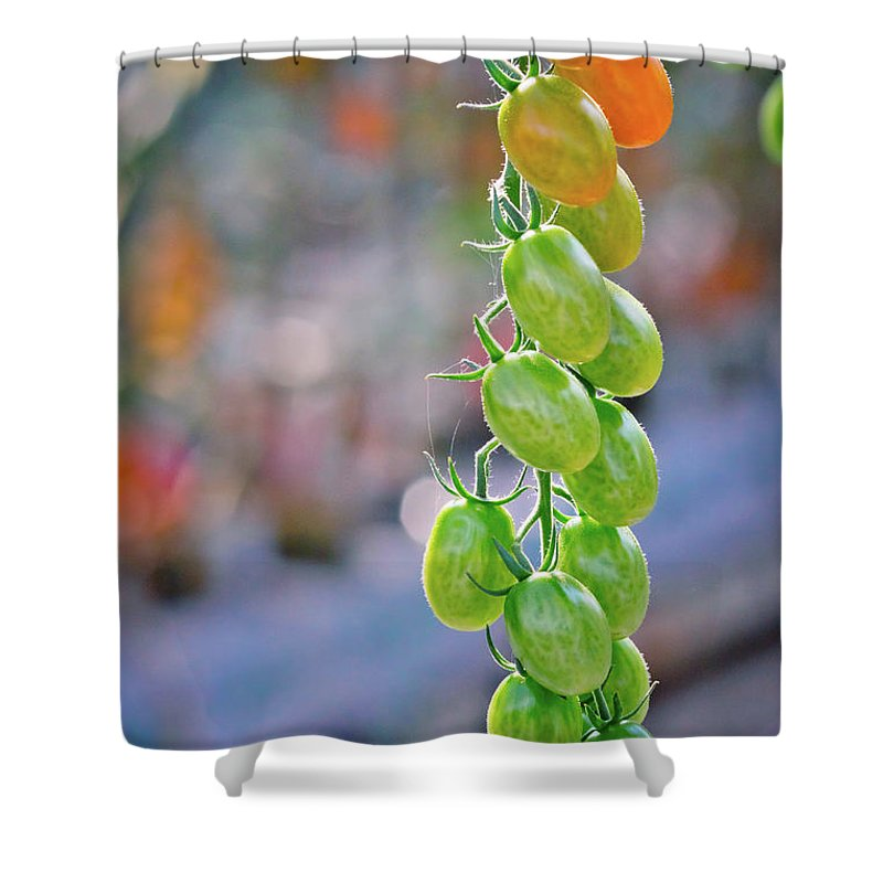 Tomatoes Shower Curtain featuring the photograph Tomato Heaven by Linda Unger