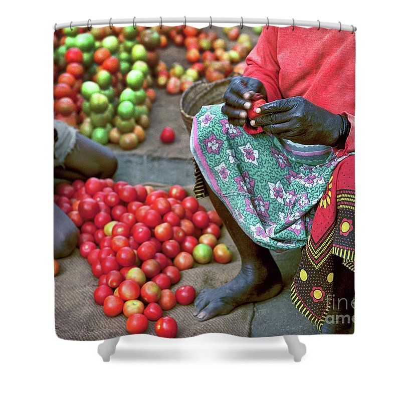 Fruit Shower Curtain featuring the photograph Tomatoes by Don Schimmel
