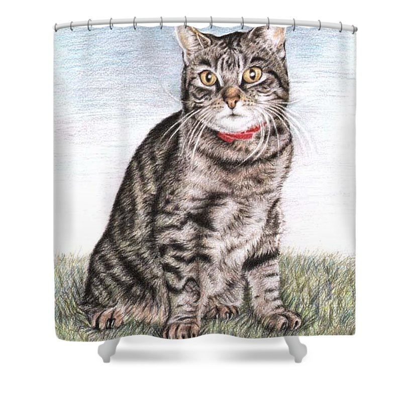 Cat Shower Curtain featuring the drawing Tomcat Max by Nicole Zeug