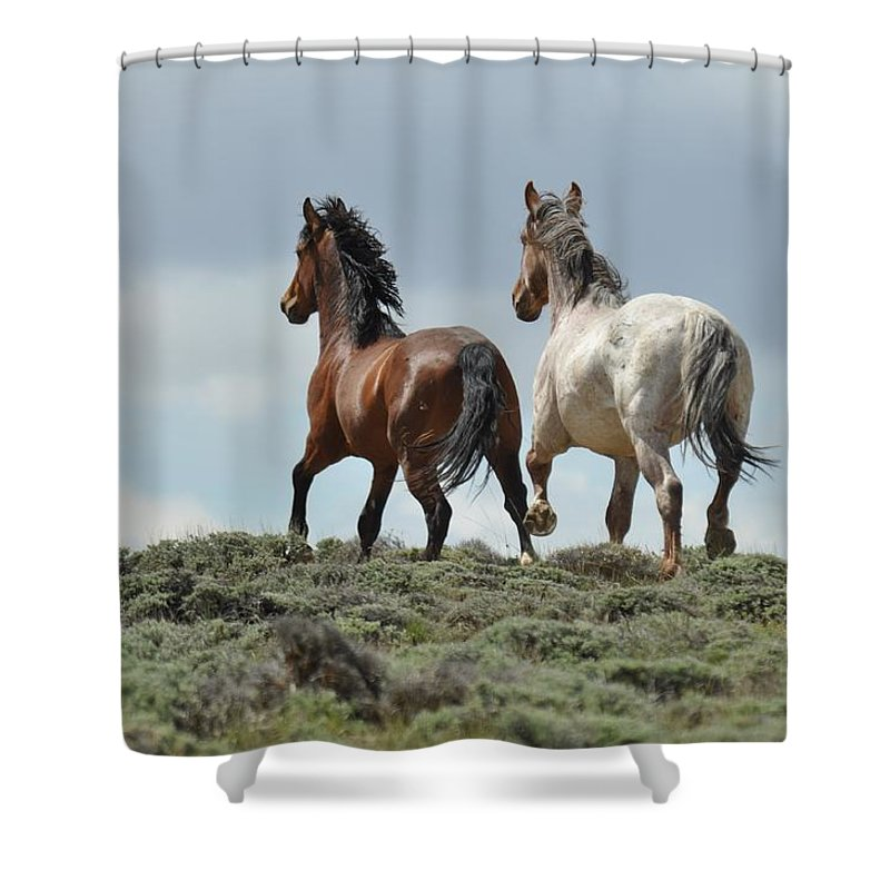 Wild Horses Shower Curtain featuring the photograph Too Beautiful by Frank Madia