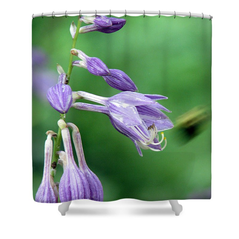 Bees Shower Curtain featuring the photograph Too Busy To Notice by Amanda Barcon