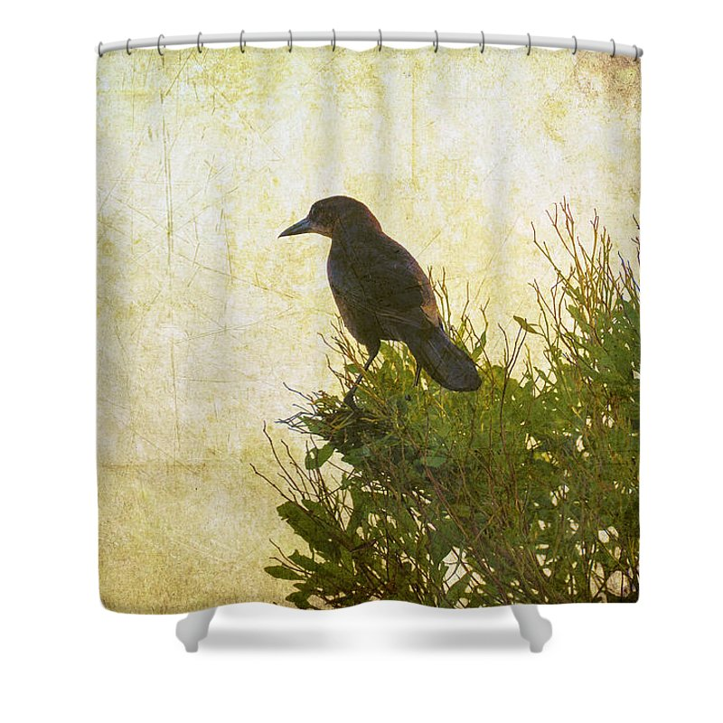 Birds Shower Curtain featuring the photograph Top Of The World by Jan Amiss Photography