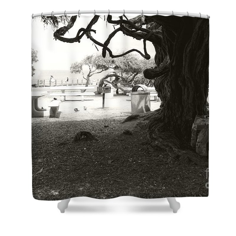 La Jolla Shower Curtain featuring the photograph Torrey Pines Baggage Claim by Heather Kirk