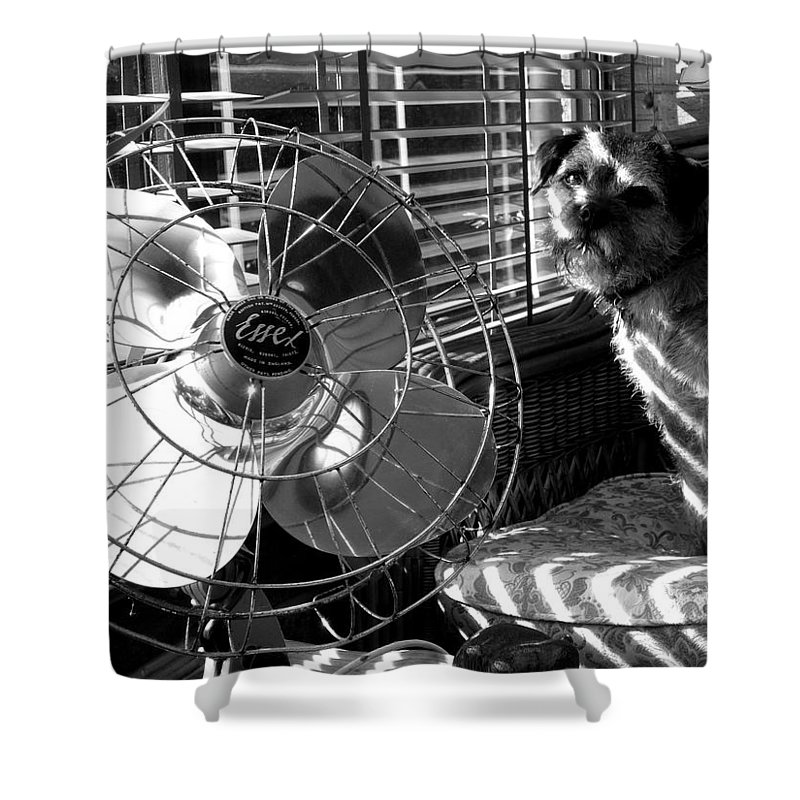 Electric Fan Shower Curtain featuring the photograph Toto Checks In by Charles Stuart