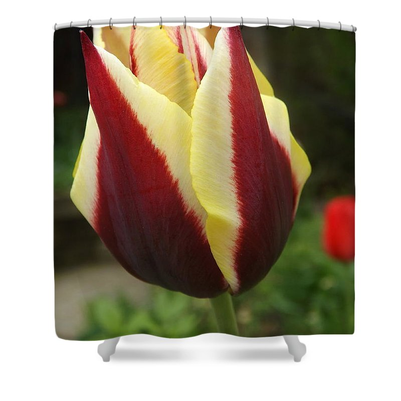 Spring Shower Curtain featuring the photograph Touch Me In The Morning by Lingfai Leung