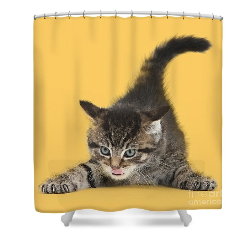 Cute Shower Curtain Featuring The Photograph Tough Ally Kitten By Warren Photographic