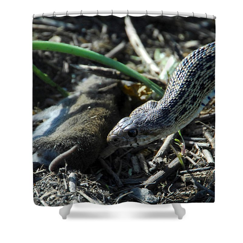 Snake Shower Curtain featuring the photograph Tragedy by Donna Blackhall