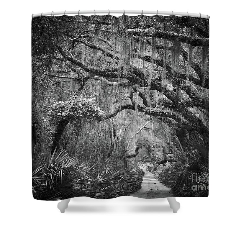 Cumberland_island Shower Curtain featuring the photograph Trail At Cumberland Island by Stanton Tubb