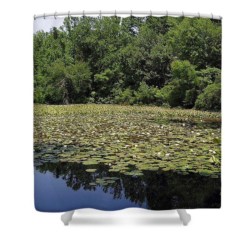 Tranquility Shower Curtain featuring the photograph Tranquility by Flavia Westerwelle