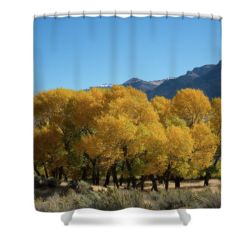 Cody Shower Curtain featuring the photograph Tranquility in Golds and Yellows by Frank Madia