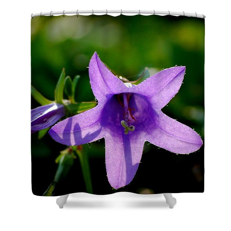 Digital Photography Shower Curtain featuring the digital art Translucent by David Lane