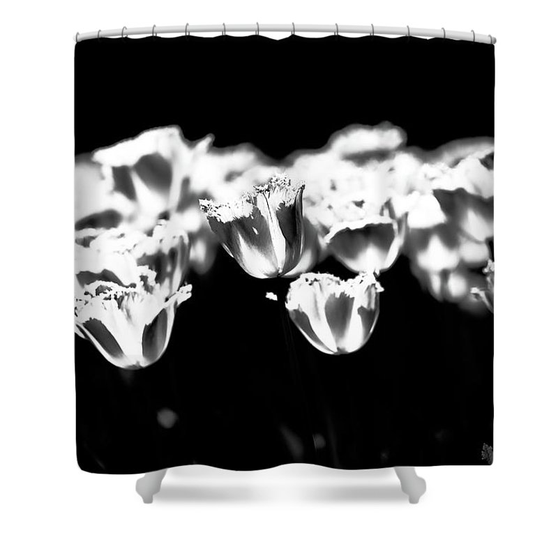 Tulip Shower Curtain featuring the photograph Transparence by Hyuntae Kim
