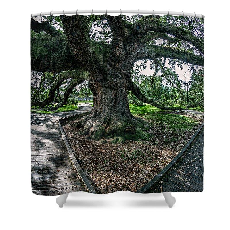 Jacksonville Florida Shower Curtain featuring the photograph Treaty Oak 12-14-2015 056 by Chuck Walla