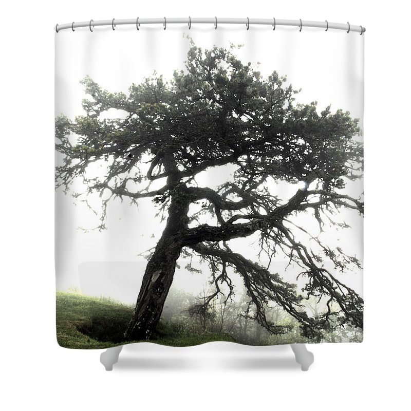 Hdr Shower Curtain featuring the photograph Tree by Alex Grichenko