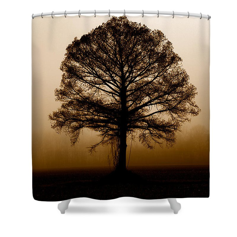 Trees Shower Curtain featuring the photograph Tree by Amanda Barcon