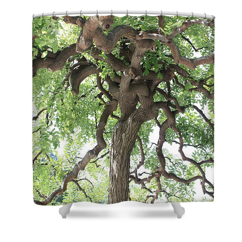 Tree Shower Curtain featuring the photograph Tree At Ming Tombs by Carol Groenen