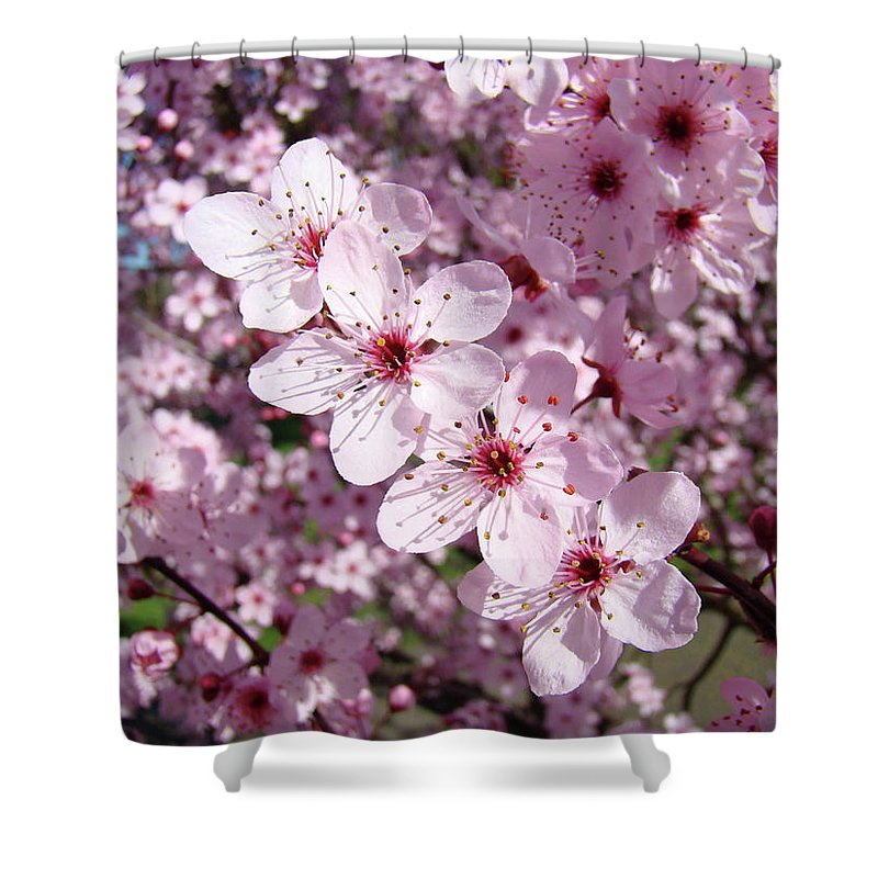 Colorful Shower Curtain featuring the photograph Tree Blossoms Pink Spring Flowering Trees Baslee Troutman by Baslee Troutman