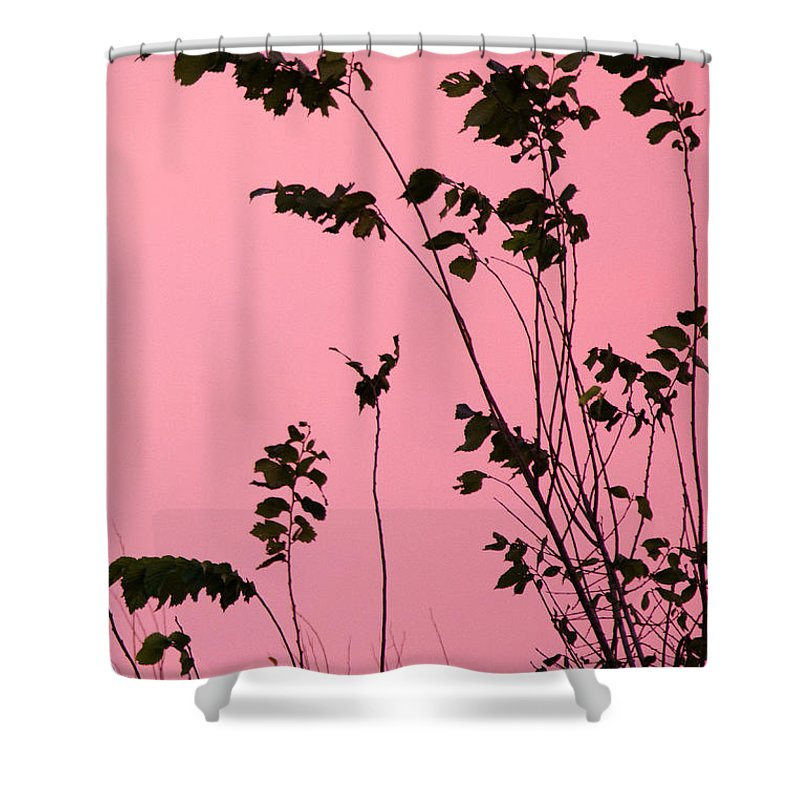 Branches Shower Curtain featuring the photograph Tree Branches Under Pink Sky by Ellie Teramoto
