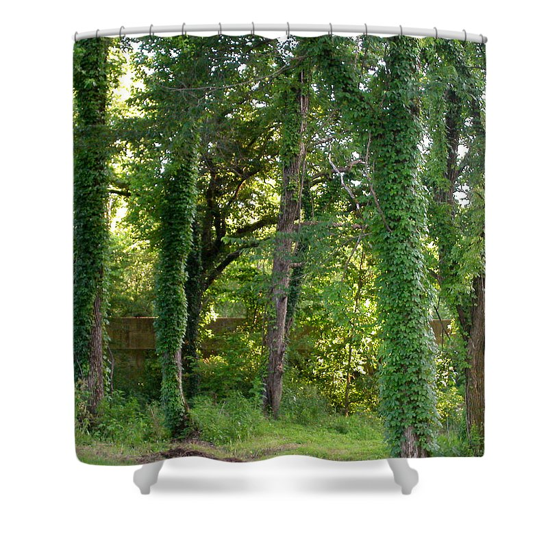 Trees Shower Curtain featuring the photograph Tree Cathedral 2 by Anne Cameron Cutri