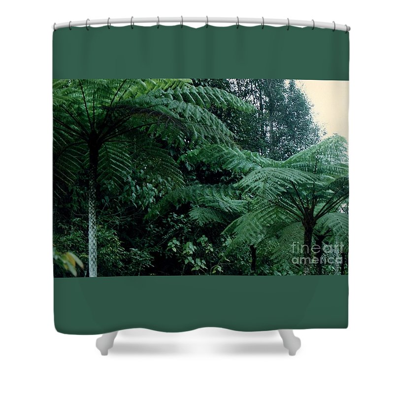 Plants Shower Curtain featuring the photograph Tree Ferns by Jane Gatward