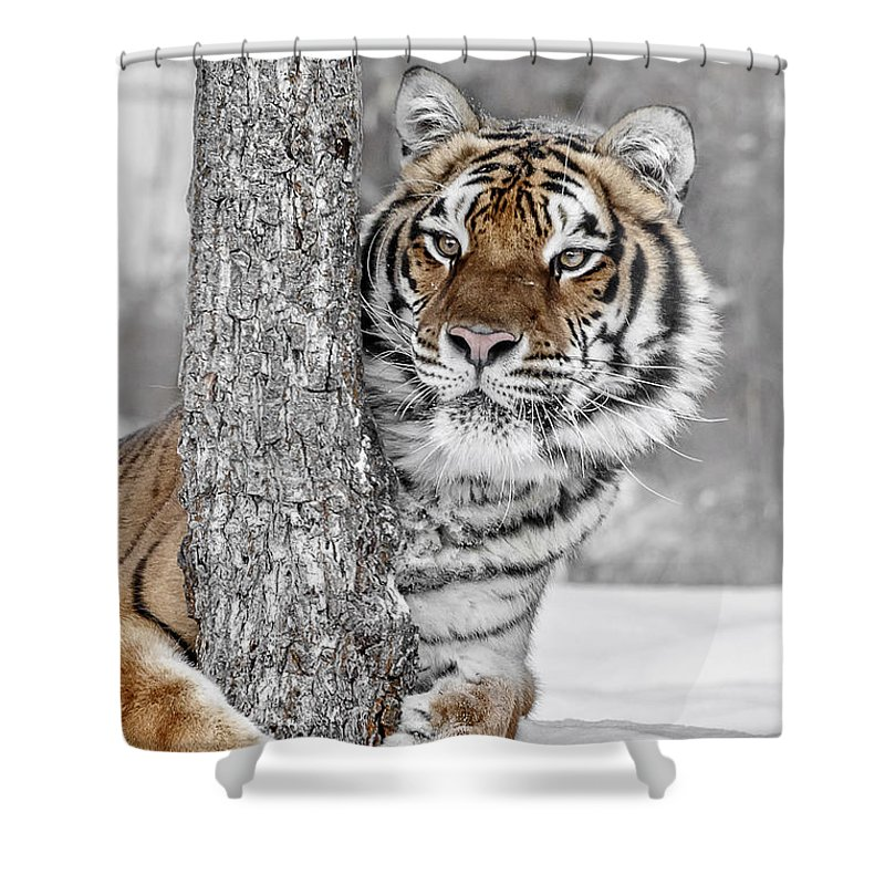 Tree Huggin Shower Curtain featuring the photograph Tree Huggin by Wes and Dotty Weber