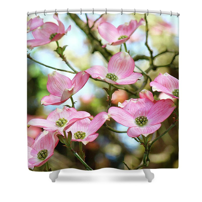 Nature Shower Curtain featuring the photograph Tree Landscape Pink Dogwood Flowers Baslee Troutman by Baslee Troutman