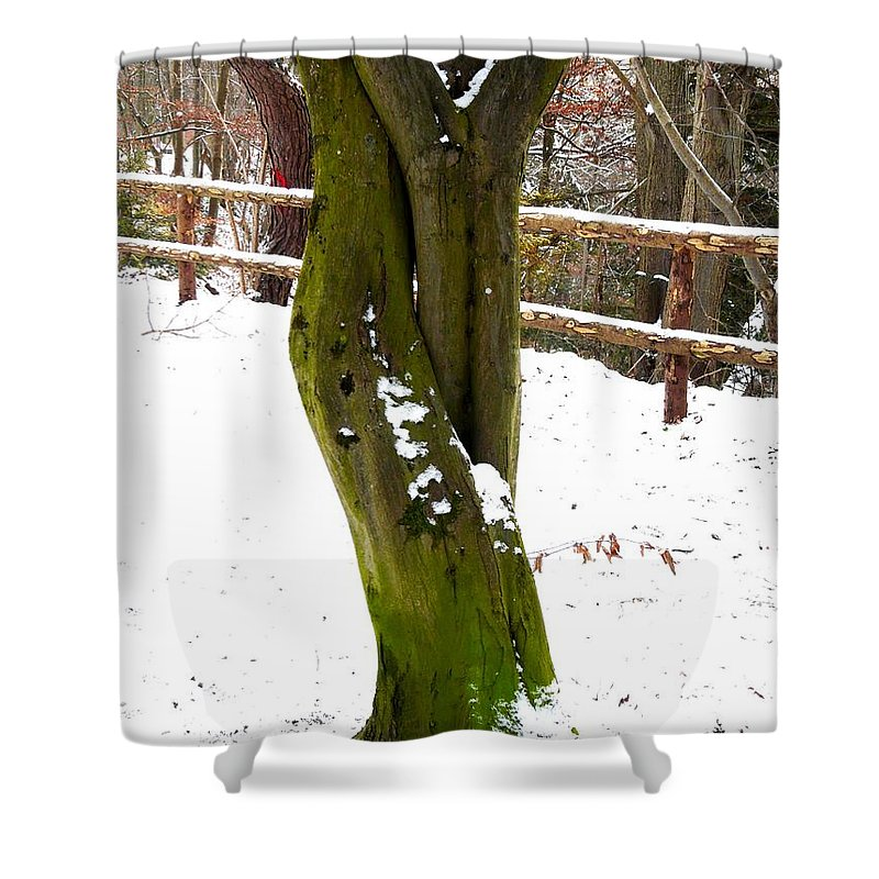 Tree Shower Curtain featuring the photograph Tree Lovers by Valerie Ornstein