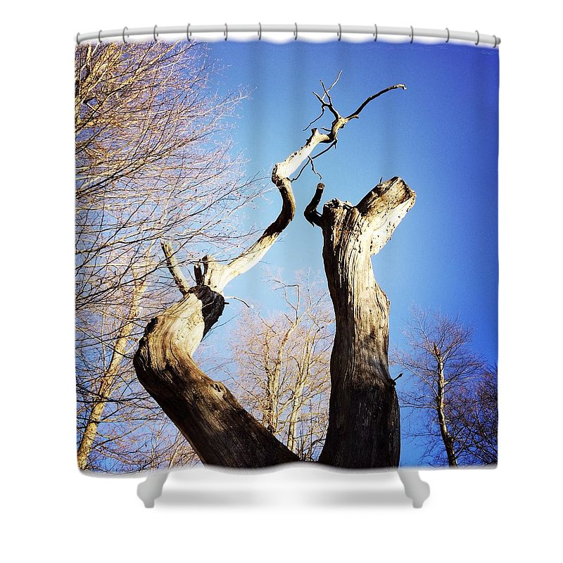 Tree Shower Curtain featuring the photograph Tree by Matthias Hauser