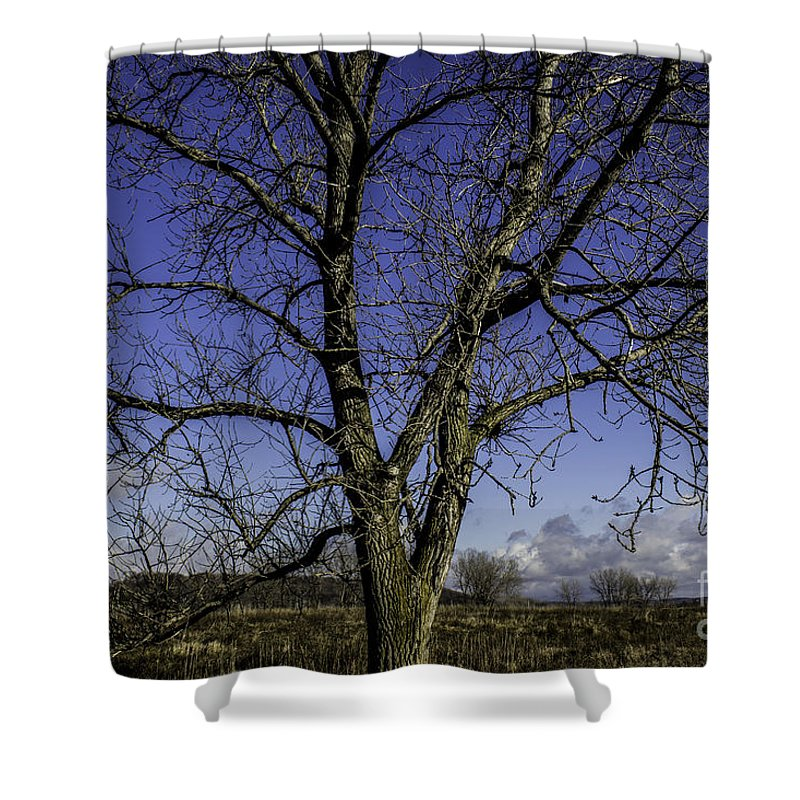 Blue Shower Curtain featuring the photograph Tree Of Blue by Doug Daniels